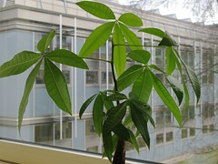 Surprising Benefits of Office Plantsl