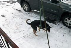 Tut_snow_122810c