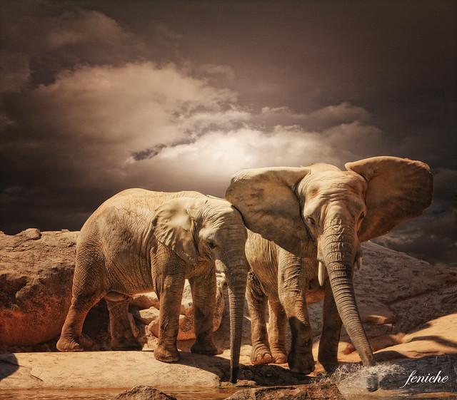 elefantes y agua