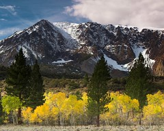 Aspens and Parker Peak, October 16, 2010 (Robert Pearce Photography) Tags: california trees light orange cloud mountain snow fall yellow rock landscape october aspens folliage 2010 parkerpeak easternsierra clearingstorm nikond200 parkerridge robertpearce robertpearcephotography