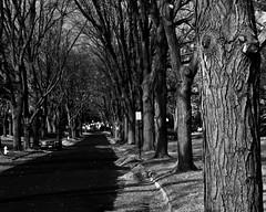 Fall trees (AlexKT) Tags: road street autumn trees light blackandwhite cold detail fall raw pattern room lightroom shootraw lightroom3 rawprocess olympuspenepl1