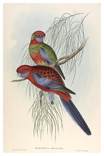 030-Periquitos banderin-The Birds of Australia  1848-John Gould- National Library of Australia Digital Collections