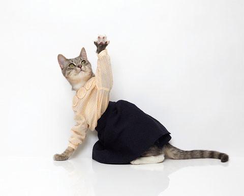 cat2_blog