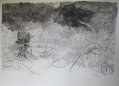 ( 3) 12.2010 (Hava Matzkin Eilam Art) Tags: trees nature fire drawing air portfolio  hava eilam  matzkin