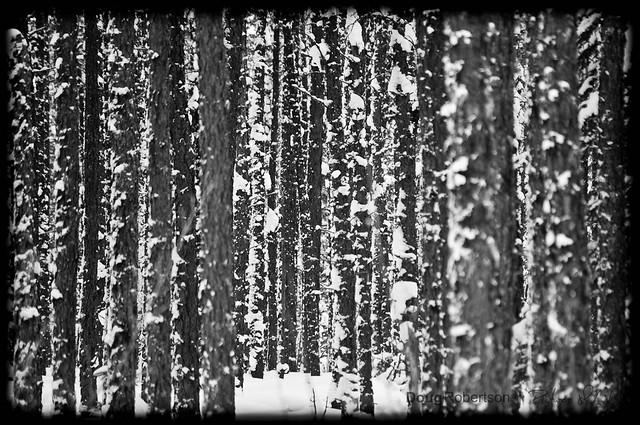 Snowy woods.