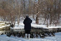 Feeding Ducks and Geese at a snowy High Park (Toronto, 2011) (Gustavo Thomas) Tags: toronto ontario canada geese highpark 2010 patos snowylandscape gansos feedingducks paisajenevado