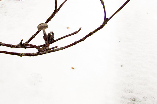 Winter day 17 - Stark raving magnificent