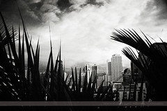 Skyline, Bangkok, Thailand (Seven Seconds Before Sunrise) Tags: travel bw leaves skyline architecture clouds thailand asia southeastasia bangkok bkk sukhumvit palmleaves