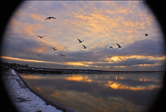 sunset park 2 (thelittleone417) Tags: sunset seagulls reflection clouds wideangle
