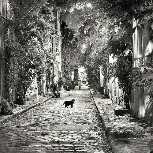 Le chat de la rue des glycines .