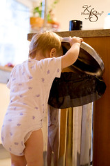 The Trash Man (Kidzmom2009) Tags: baby toddler dirty trouble mischief defiant digginginthetrash gettyimageswant gettyimageswants gettywants familygetty2010 defianttoddlers mischiefinthekitchen