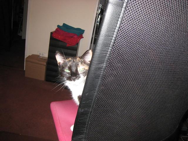 Peekaboo Amy
