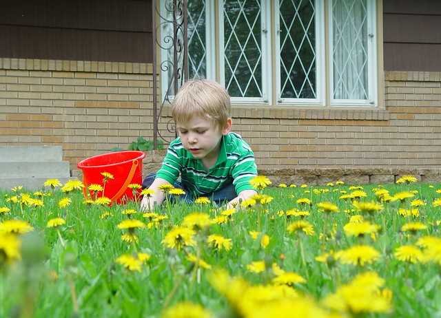 Connor picking dandelions