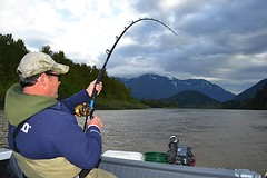 Keith's Sturgeon6 (Great River Fishing) Tags: fish fishing flyfishing trout fraserriver sturgeon steelhead slamon