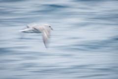In flight (D-Niev) Tags: norway svalbard