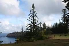 "Norfolk Island pines and ocean • <a style=""font-size:0.8em;"" href=""http://www.flickr.com/photos/10945956@N02/5383684683/"" target=""_blank"">View on Flickr</a>"