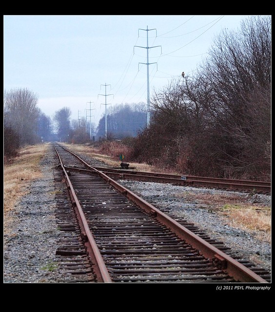 Rail tracks and Red-tailed Hawk