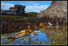 Munmorah Rockpool Life (Stevpas68) Tags: ocean summer seaweed beach water reflections lumix rocks australia sealife ps panasonic kelp nsw pointandshoot lowtide intertidalzone underwatercamera rockpool munmorah ghostiesbeach timberbeach lumixdmcft2