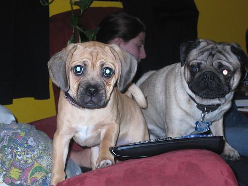 Bert & Dehliah