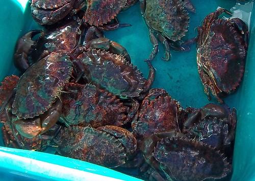 Fishermen's Market Saturday Harbor 3