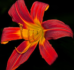 red and yellow-2.jpg (.Markus Landsmann) Tags: pentax k20d pentaxk20d mlphoto mlphoto markuslandsmannzenfoliocom