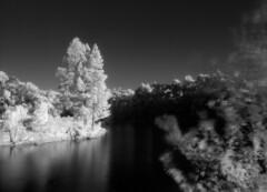 RIP Martin Tyrrell (polyglot) Tags: reflection 120 water reservoir picaday millbrook aura filmscan rz67 xtol r72 autaut ir820
