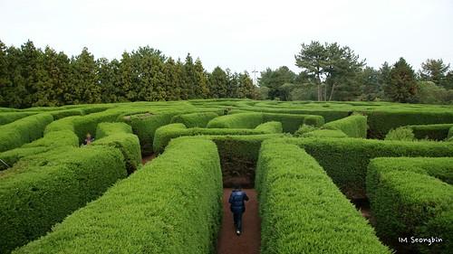 Maze (미로)