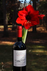 2008 Catena Cabernet Sauvignon