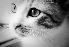 I'm still here.... (Sol the kitty) (Ndia Monteiro) Tags: bw sun sol animal cat nikon image kitty gata felino olho fotografia nariz cateye gatinha focinho ndia blackwhitephotos catimage