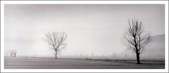 you said you'd wait until the end of the world (LikeAPolaroid) Tags: camera trees panorama white black film fog alberi darkroom print landscape fb d76 nebbia ilford fp4 mamiya645 warmtone toning oscura selenium neutol autaut