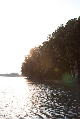เช้า ณ ป่าโกงกาง.