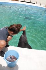イルカラグーン, 沖縄美ら海水族館