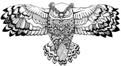 owl with keys (fake glue) Tags: tattoo illustration drawings owl liner isograph