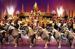 Elephants at Phuket Fantasea
