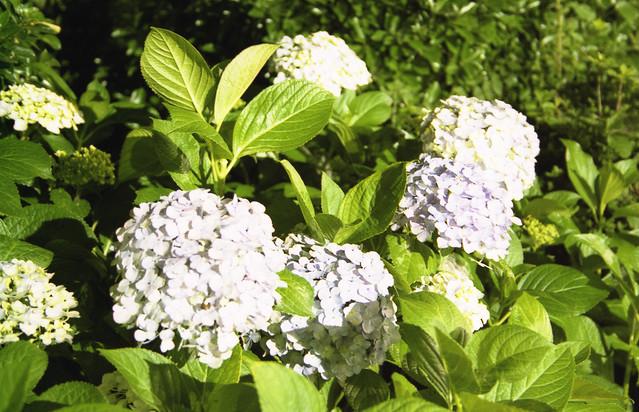 光で照らされた花のフリー写真素材