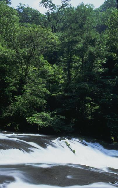 渓流と森のフリー写真素材