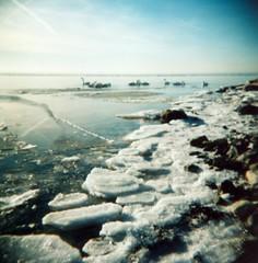 (Monica Forss) Tags: winter sea 120 6x6 film ice water birds analog mediumformat skåne holga lomography sweden toycamera swans analogue malmö holga120n plasticlens lomo100 120lomographycolornegativeiso100