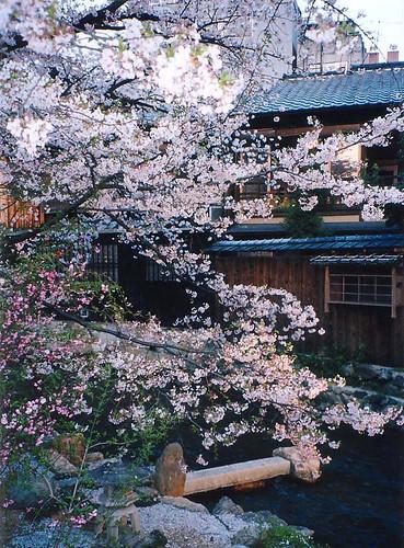 shirakawa creek blog20101230_5092