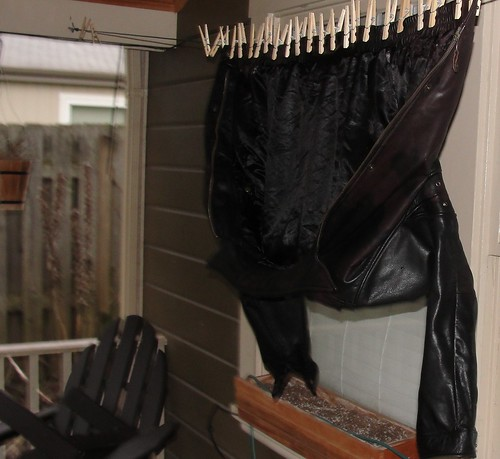 Wet leather jacket suspended upside down from a clothesline with 24 clothespins.