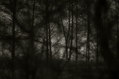 war (Timoleon Vieta II) Tags: trees light dark war dof selftaught departure eviction richvspoor comesee klimov timoleon shotthroughtrees
