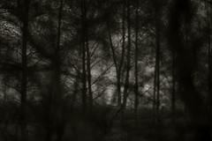 war (Timoleon Vieta II) Tags: trees light dark war dof selftaught departure eviction richvspoor comesee klimov timoleon shotthroughtrees