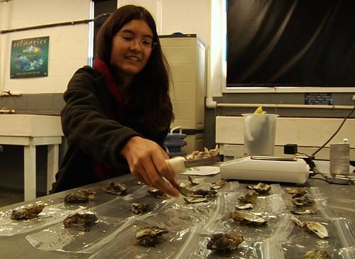 Tanya arranges oyster shells