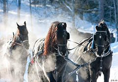 * (G Er Foto) Tags: winter horses horse snow vinter factory grandmother superhero thumbsup sweep cy hst blackorwhite hstar rttvik bigmomma gamewinner unanimous cy2 challengeyou challengeyouwinner dimex favescontestwinner friendlychallenges sldtur diamondsawards starsawards ultrahero challengefactorywinner thechallengefactory thegrandmotheraward gamex2winner herowinner ultraherowinner thepinnaclehof gamex3winner gamex3 gameonwinner pregamewinner pregamesweepwinner gamex2gamevsgamewinners vagnhistoriskafreningen rfkbild1103 hofwinner favescontestfavored tphofweek100