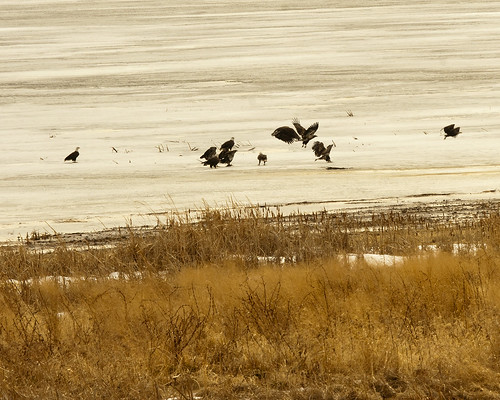 02172011JGW-EaglesThompsonLakeWetland_MG_2560