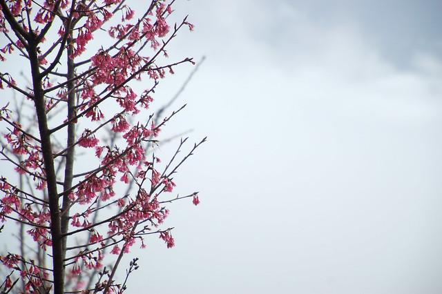 2011.02.20 南投 / 五城 / 槌仔寮