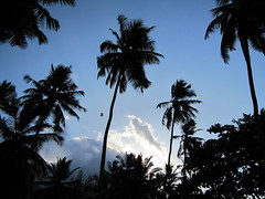 Early morning palm trees, Meridien Barbarons Hotel, Seychelles (wrightrkuk) Tags: africa trees sky palms islands coast indianocean palmtrees tropicalislands seychelles seashore tropics archipelago mahe britishcommonwealth archipelagos tropicaltrees touristdestinations maheisland africanislands meridienbarbarons