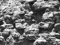 3467 (timrothonphotography) Tags: schnee blackandwhite snow berlin germany deutschland europe stones steine europeanunion westerneurope viktoriapark