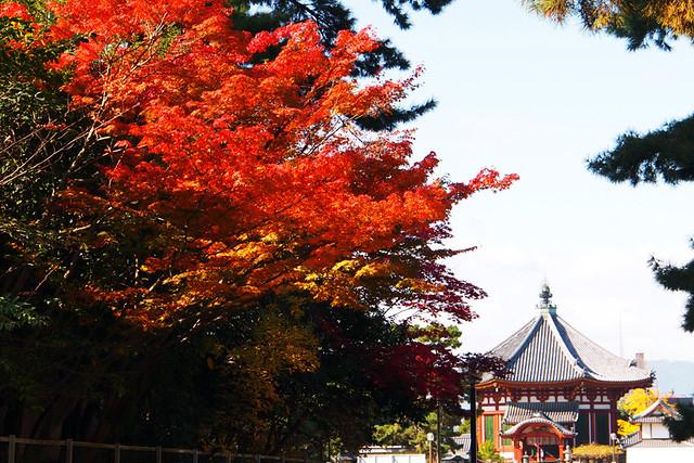 20101116_101547_興福寺