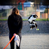 Zero Gravity (MousseFromSacto) Tags: ball jump dogpark fetch ef70200mmf28lisusm