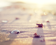 """It is perhaps a more fortunate destiny to have a taste for collecting shells than to be born a millionaire."" (CarolynsHope) Tags: light sunset shells beach sand dof bokeh shell shore carolynshope"